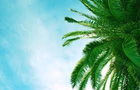 كف كف اوراق اشجار الأشجار شاطئ بحر أفريقيا خلفيات سطح المكتب