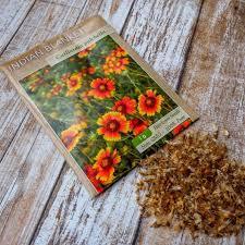 indian blanket seeds gaillardia pulca