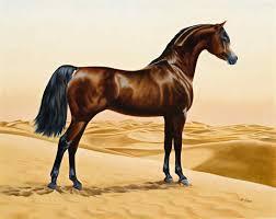 حصان عربي اجمل صور للحصان العربي عيون الرومانسية