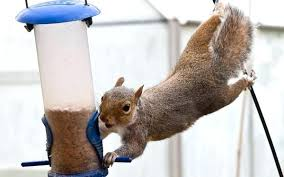 debunking homemade squirrel repellents