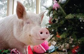 This tree is coming down immediately,... - Esther the Wonder Pig | Facebook