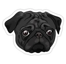 Cute Black Pug Portrait Stickers By Torriphoto Redbubble Black Pug Black Pug Puppies Dog Stickers