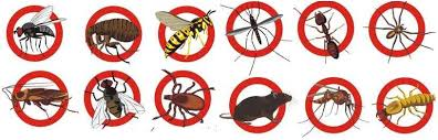 Pest Prevention: 5 Ways to Stop the Problem Before it Starts - %%