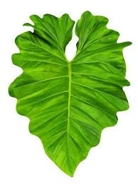 Philodendron Large Jungle Leaf Wall Decal Wallmonkeys Com