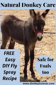 homemade fly spray for donkeys the