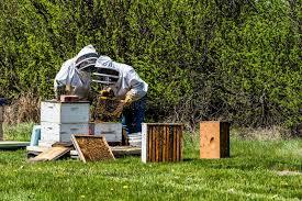 Δύο Unrecognizable Beekeepers που επιθεωρούν τους δίσκους ...