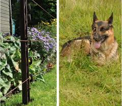 Safe Canine Electric Fences For Dogs Gallagher