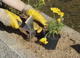 clay soil in the flower garden