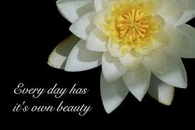 hd everyday has it s own beauty quotes water lily
