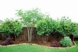 Along Back Fence Privacy Landscaping Backyard Privacy Landscaping Privacy Fence Landscaping