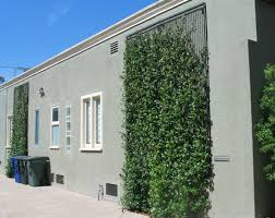 Easy Way To Train Twining Vine Plants On Walls Fences And Flat Surfaces