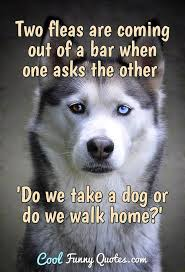 dog quotes cool funny quotes