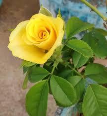 خلفيات ورد وباقات زهور Hd جديدة معلومة