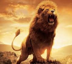 lovely roaring lion wallpaper hd 1080p