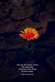 time for stillness nature quotes flower quotes simple life quotes