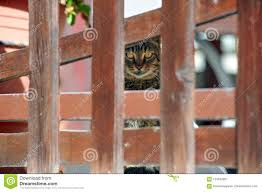 Cat Behind The Fence Stock Image Image Of Home Fencing 124542007