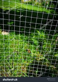 Metal Chicken Wire Mesh Fence Keeping Miscellaneous Stock Image 1486003085