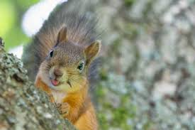 19 home remes to get rid of squirrels