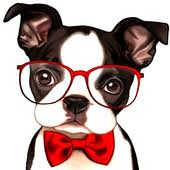 boston terrier wallpaper apk