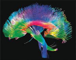 Una de las áreas más novedosas dentro del estudio del cerebro en ...