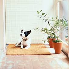 10 best plants safe for cats and dogs