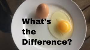 pastured vs mercial eggs
