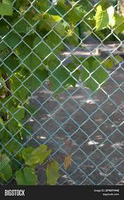 Green Leaves Climbing Image Photo Free Trial Bigstock
