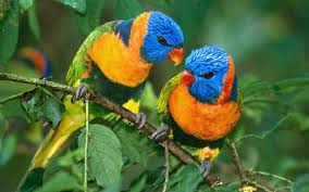 صور عصفير اجمل خلفيات عصافير بالوان جميلة صبايا كيوت
