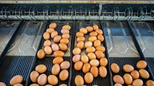 Bosnia and Herzegovina cleared to supply egg products to the EU :: IEG  Policy