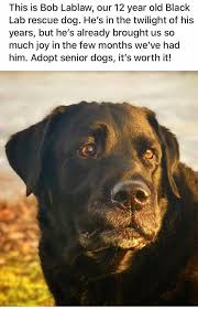 proof that cats and dogs are never too old to be adopted