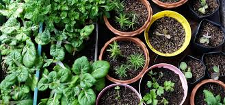 growing food at home in small spaces