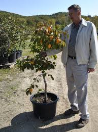 growing fruit trees in containers part
