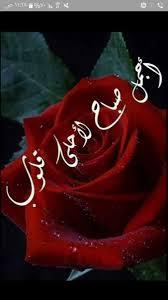 احمد الخالدي On Twitter مساء الخير ورده Https T Co Xhtohh72zq