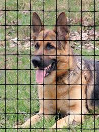 Pet Fence Boundaries And Fencing Tenax