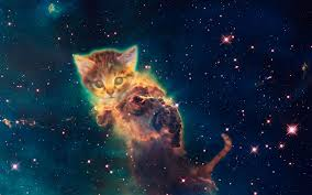 galaxy cat wallpapers top free galaxy