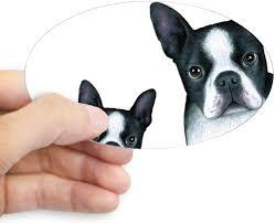 Amazon Com Cafepress Dog 128 Boston Terrier Sticker Oval Bumper Sticker Euro Oval Car Decal Home Kitchen