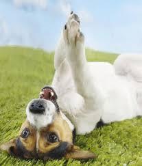 Services Pro Dog K9 Nj Hidden Dog Fence Company
