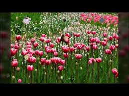 best flowers hd pictures whatsapp fb dp