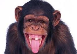 funny monkey jilljuck