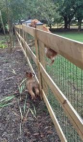 10 Best Small Dog Fence Images Dog Fence Fence Backyard Fences