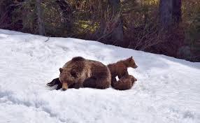 Wildlife of Banff National Park | Banff & Lake Louise Tourism