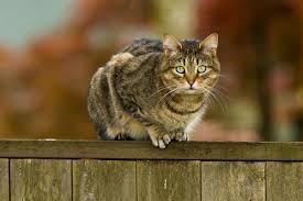 Will A Cat Fence Keep Cats Out Of Your Garden The Scaredy Cat