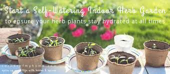 how to ensure your herb plants stay