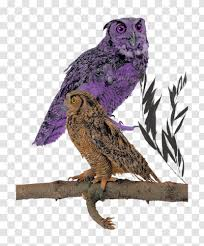 Great Grey Owl Wall Decal Beak Feather Fauna Sitting On A Branch Transparent Png