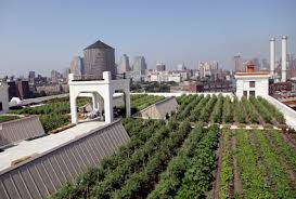 going green farm tops navy yard roof