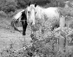 Electric Fence Offers Affordability And Safety Expert Advice On Horse Care And Horse Riding