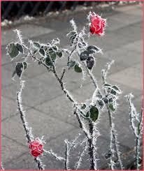 ورود بين الثلوج وجمال الطبيعة
