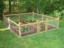 our cute garden plants vegetables