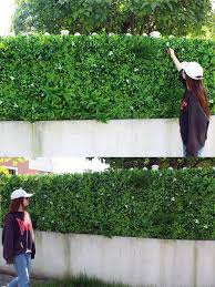 Instant Green Garden Fence Screen With Eco Friendly Artificial Hedges Artificialplantssupplier Factorydirect Artificial Hedges Hedges Garden Trees