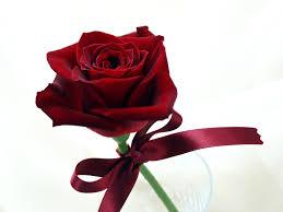 صور ورد احمر خلفيات روعة من الزهور صبايا كيوت